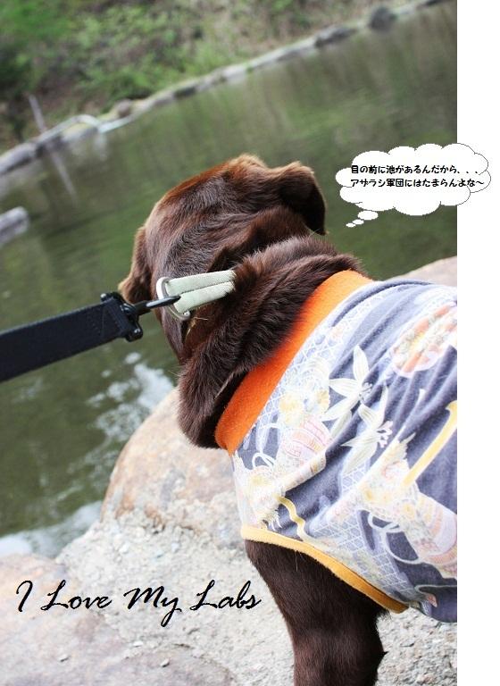 IMG_9488GW 2012-05-04