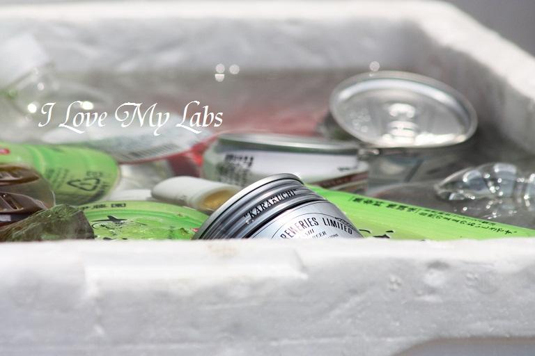 2012IMG_9959バラ祭り