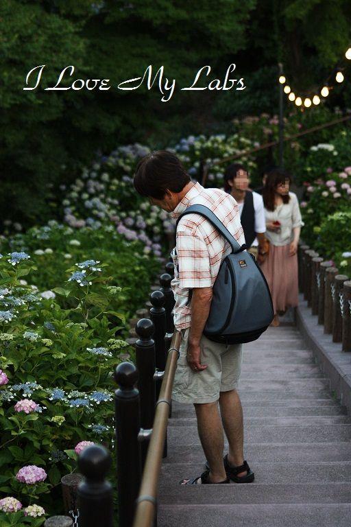IMG_0258Ajisai 2012