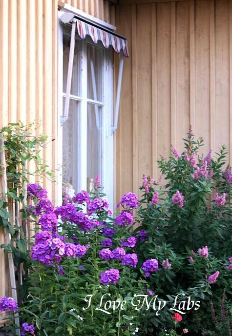 IMG_4523Sweden 2008