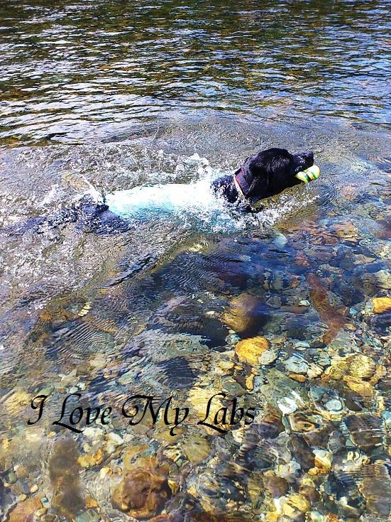 DSC_2969 (2)Itadori River