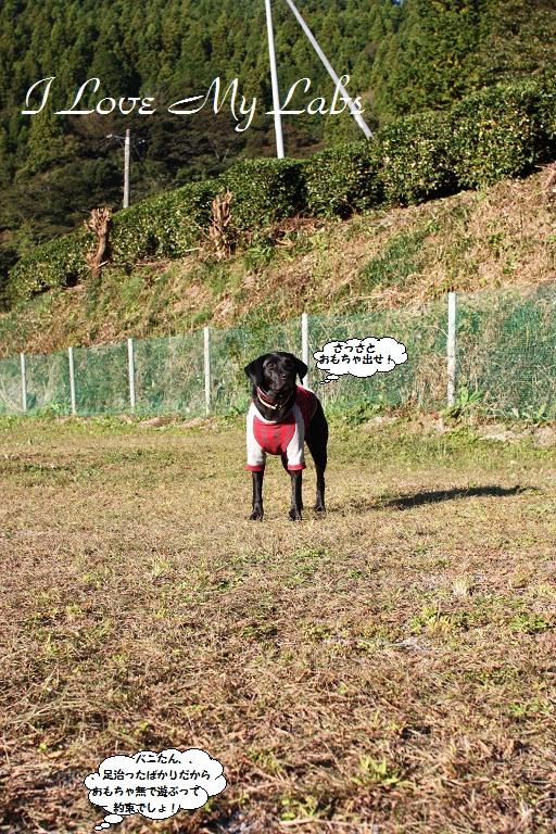 IMG_9940Vanilla Haruno Nov 2012