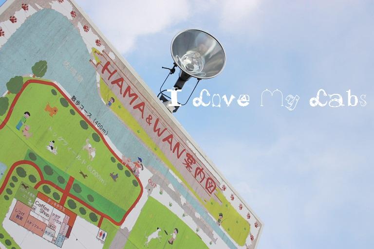 IMG_0237 (2)HamaWan 2012