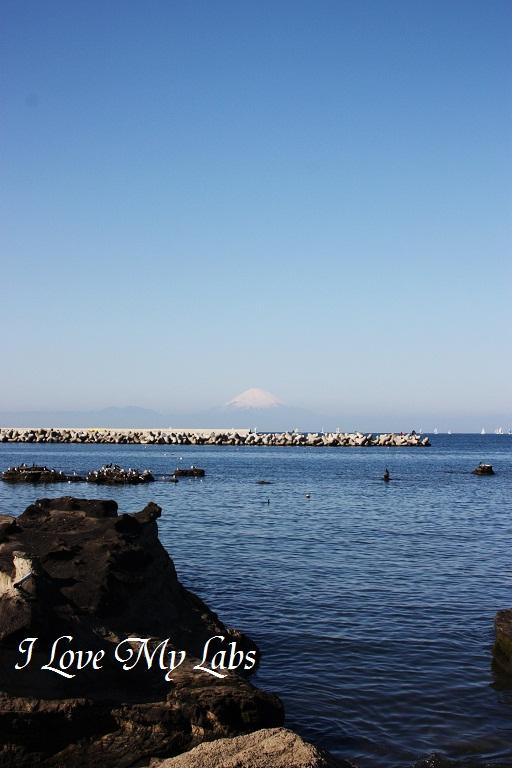 IMG_0376 (2)Aburatsubo Dec 2012