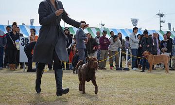 コピー ~ URSO      11.04.2012     MAISHIMA (7)