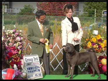 dog show 2011.11.13    96 (26)