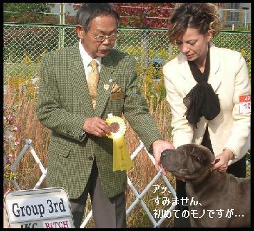 dog show 2011.11.13    96 (28)