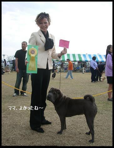 dog show 2011.11.13    96 (25)