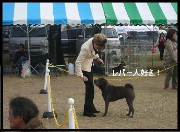 dog show 2011.11.13    96 (19)