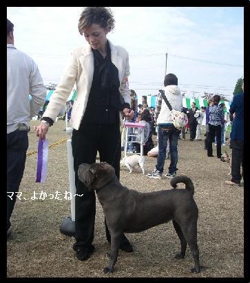 dog show 2011.11.13    96 (17)