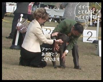 dog show 2011.11.13    96 (16)