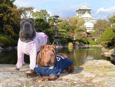 大阪城 11月2012年 1