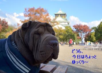 シャーペイ 大阪城 11月2012年 (1)