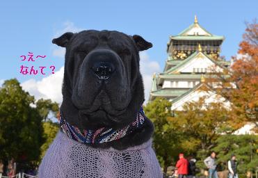 シャーペイ 大阪城 11月2012年 (4)
