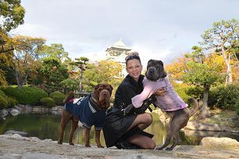 シャーペイ 大阪城 11月2012年 (10)