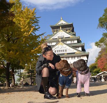 シャーペイ 大阪城 11月2012年 (7)