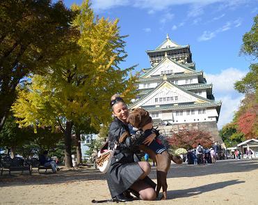 シャーペイ 大阪城 11月2012年 (6)