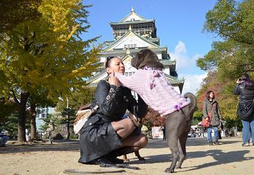 シャーペイ 大阪城 11月2012年 (5)