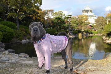 シャーペイ 大阪城 11月2012年 (19)