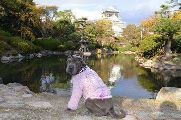 シャーペイ 大阪城 11月2012年 (18)