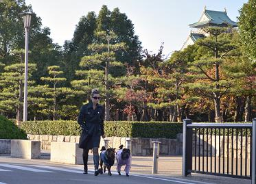シャーペイ 大阪城 11月2012年 (27)