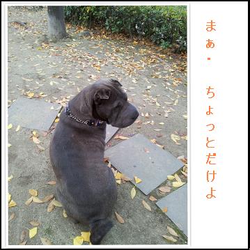 シャーペイ仔犬珍しい犬