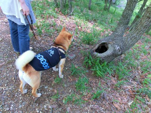 犬用トイレ2?