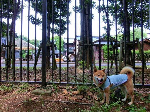 柵の向こうは犬NG