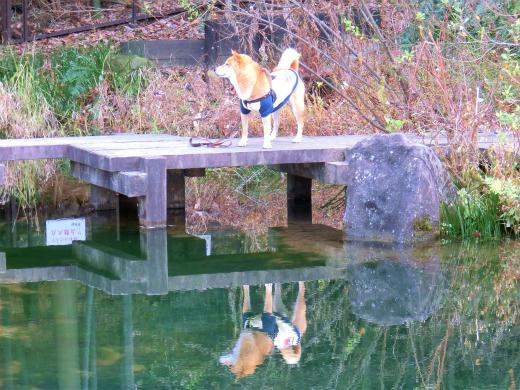 池があるの