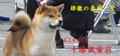 fuukun_bn_yasukaze.jpg