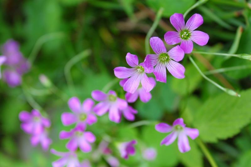 良く見る花ですが、、