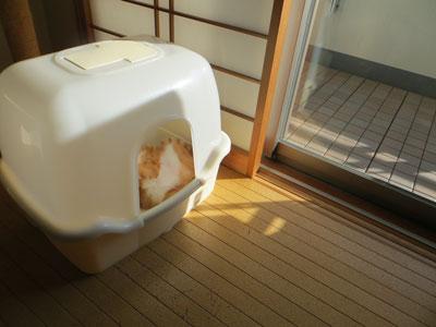 今日もトイレでくつろぐしんちゃま