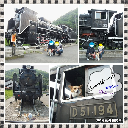 cats2_20120510233513.jpg