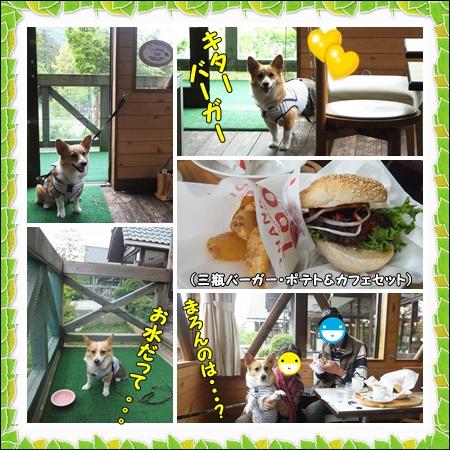 cats2_20120525202856.jpg