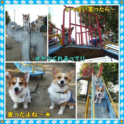cats2_20120628221126.jpg