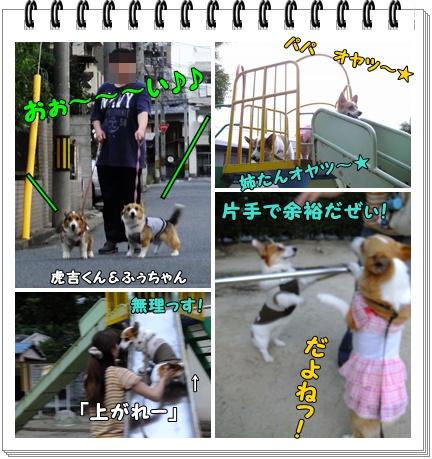 cats2_20120710215611.jpg