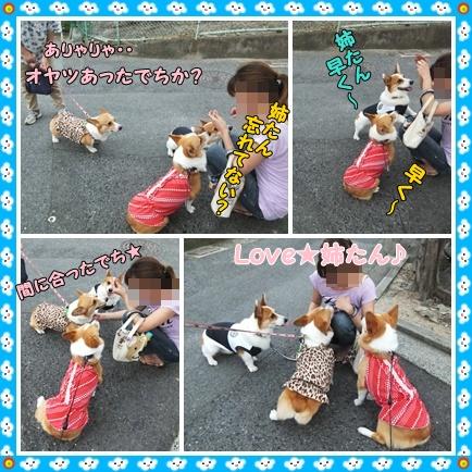 cats2_20120722174901.jpg
