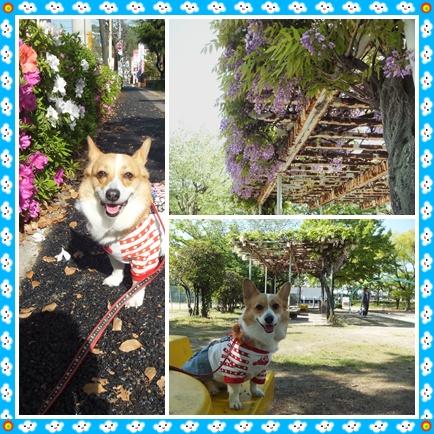 cats3_20120429093744.jpg
