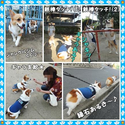cats3_20120628221125.jpg