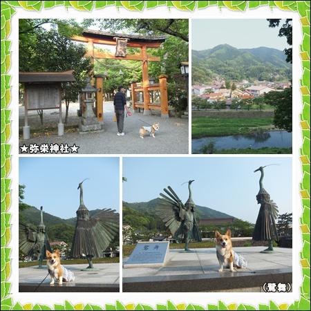 cats6_20120510233535.jpg