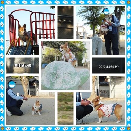 cats_20120429093743.jpg