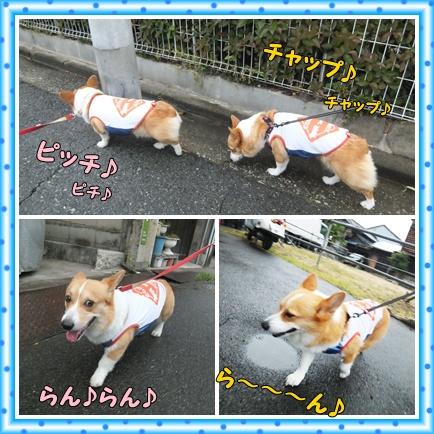 cats_20120704160814.jpg