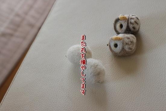IMG_9696_R.jpg