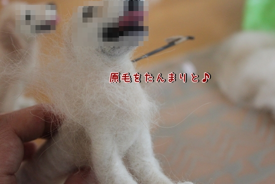 IMG_9849_R.jpg