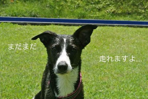 DSC_3876_copy.jpg