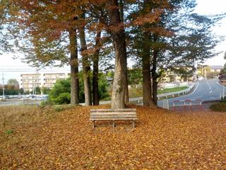 けやき公園4