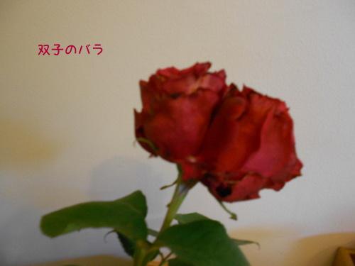 DSCN1660.jpg
