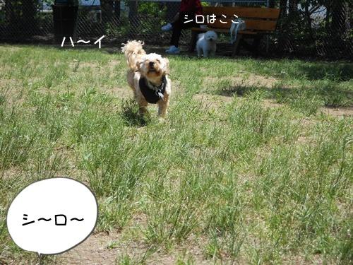 DSCN1733-001.jpg