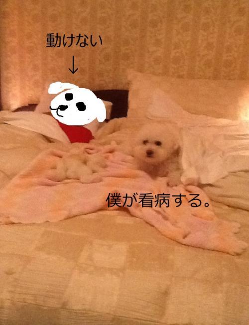 n_convert_20121017225723.jpg