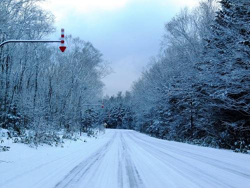 s-白い街道、、、